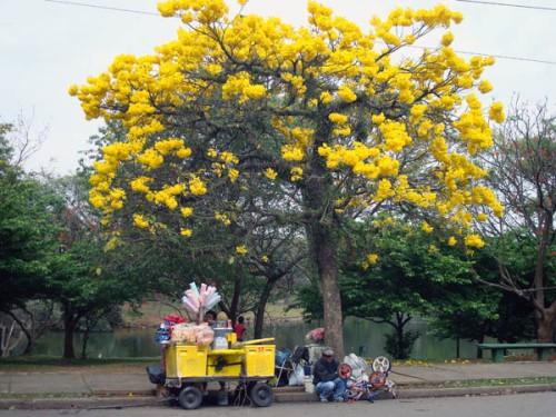 Parque Ibirapuera Sao Paulo